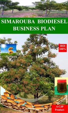 Jatropha biodiesel business plan